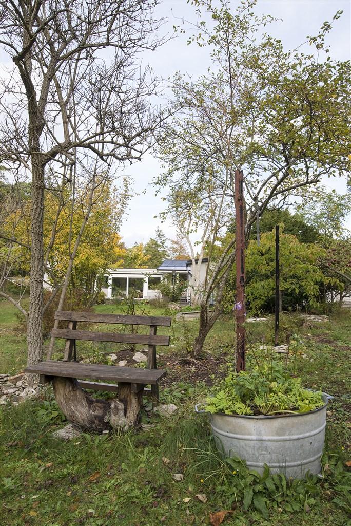 Bänk i trädgården