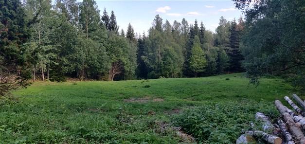 Nyputsad betesmark rensad från lövsly och växtlighet