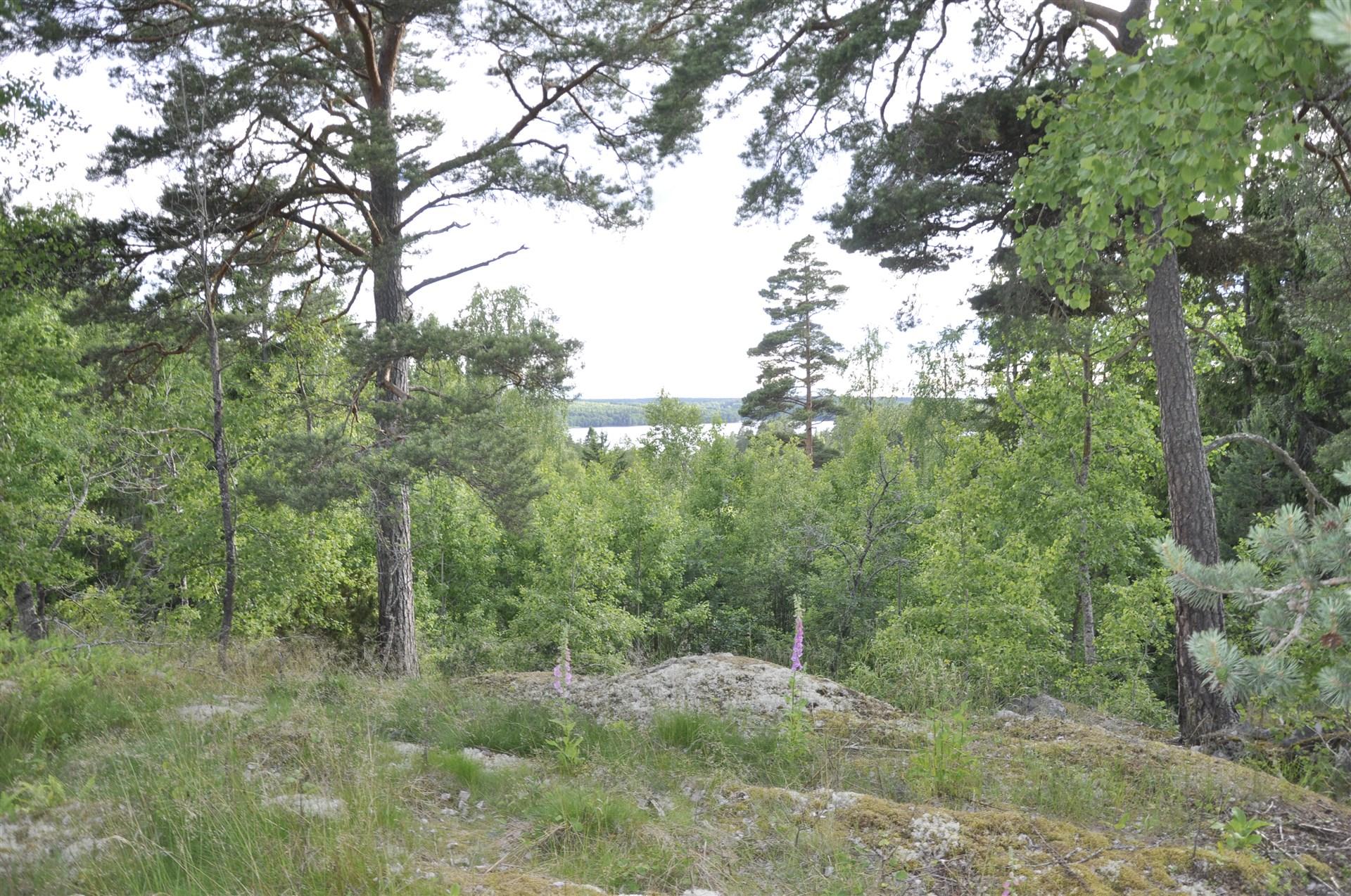 Vy från tomten mot Djupvik i söder