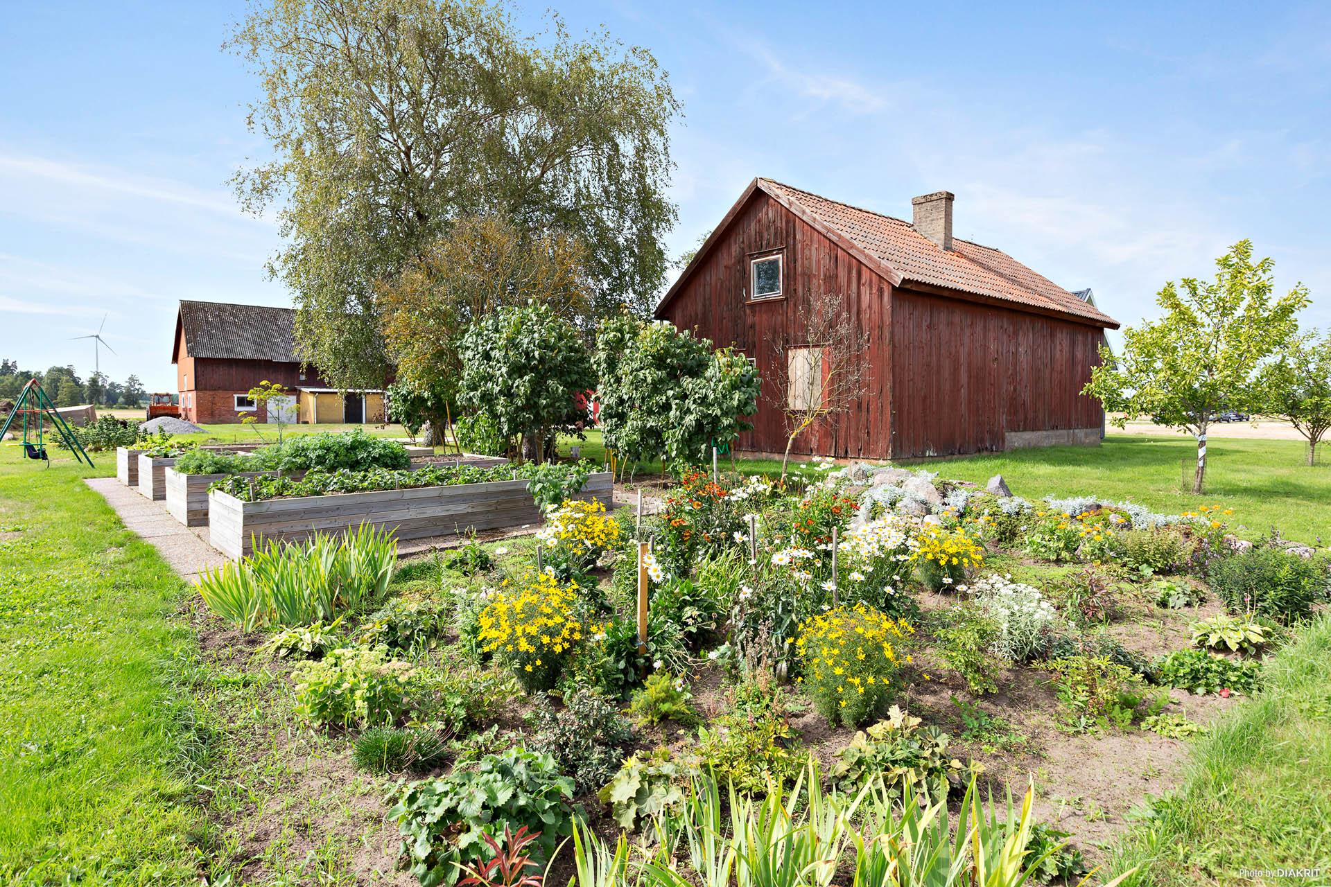 Mysig hörna i trädgården med bärbuskar och odlingslådor.
