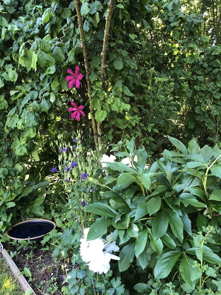 Fågelbad bland blommorna