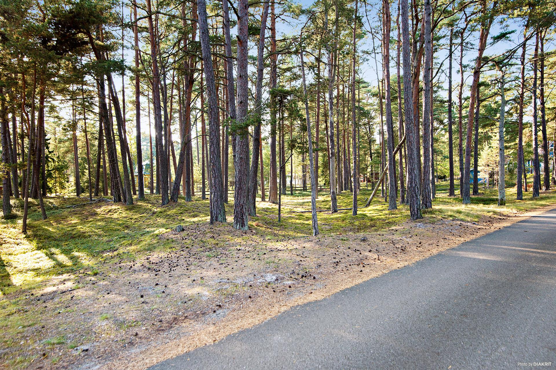 """Videvägen mot sydväst. Avstånd till Äspets vackra naturreservat """"Kronoskogen"""" är endast ca 140 meter"""