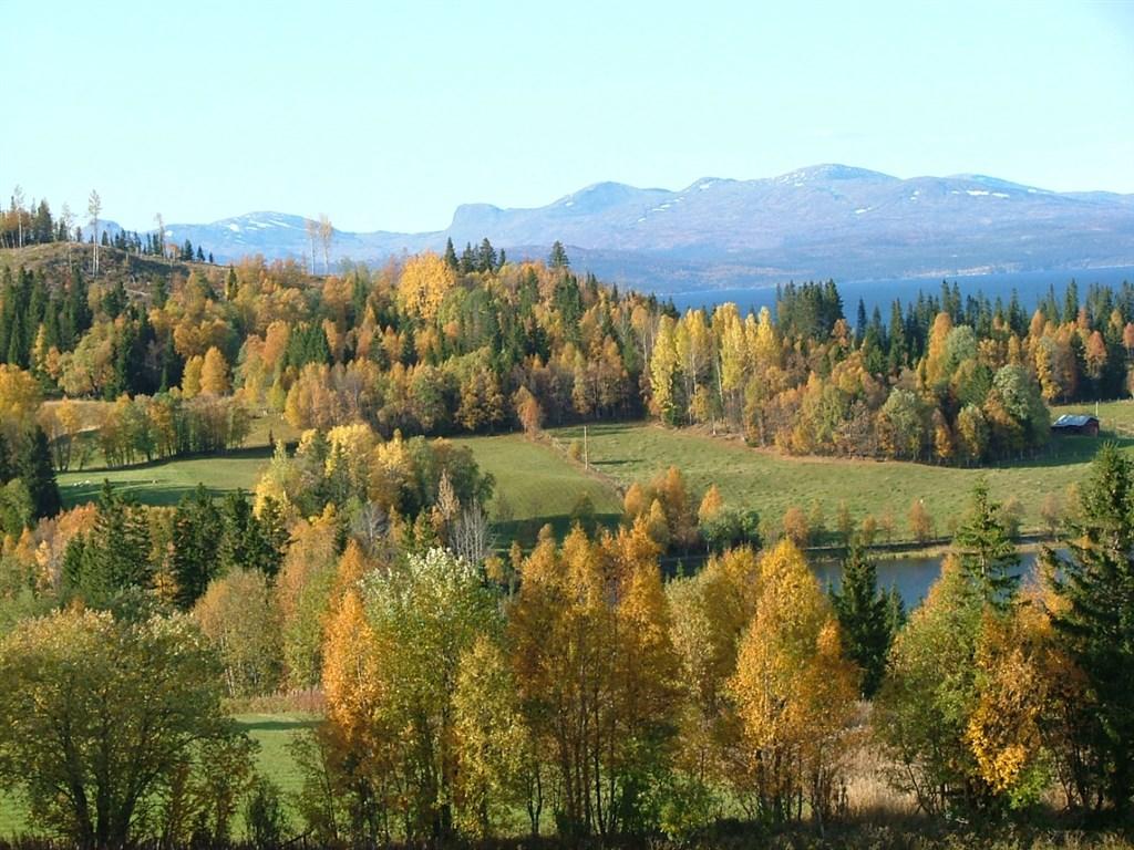 Bygden i sensommaren/hösten