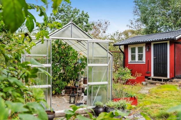 I växthuset kan man odla och njuta av vindruvor en fin höstkväll.
