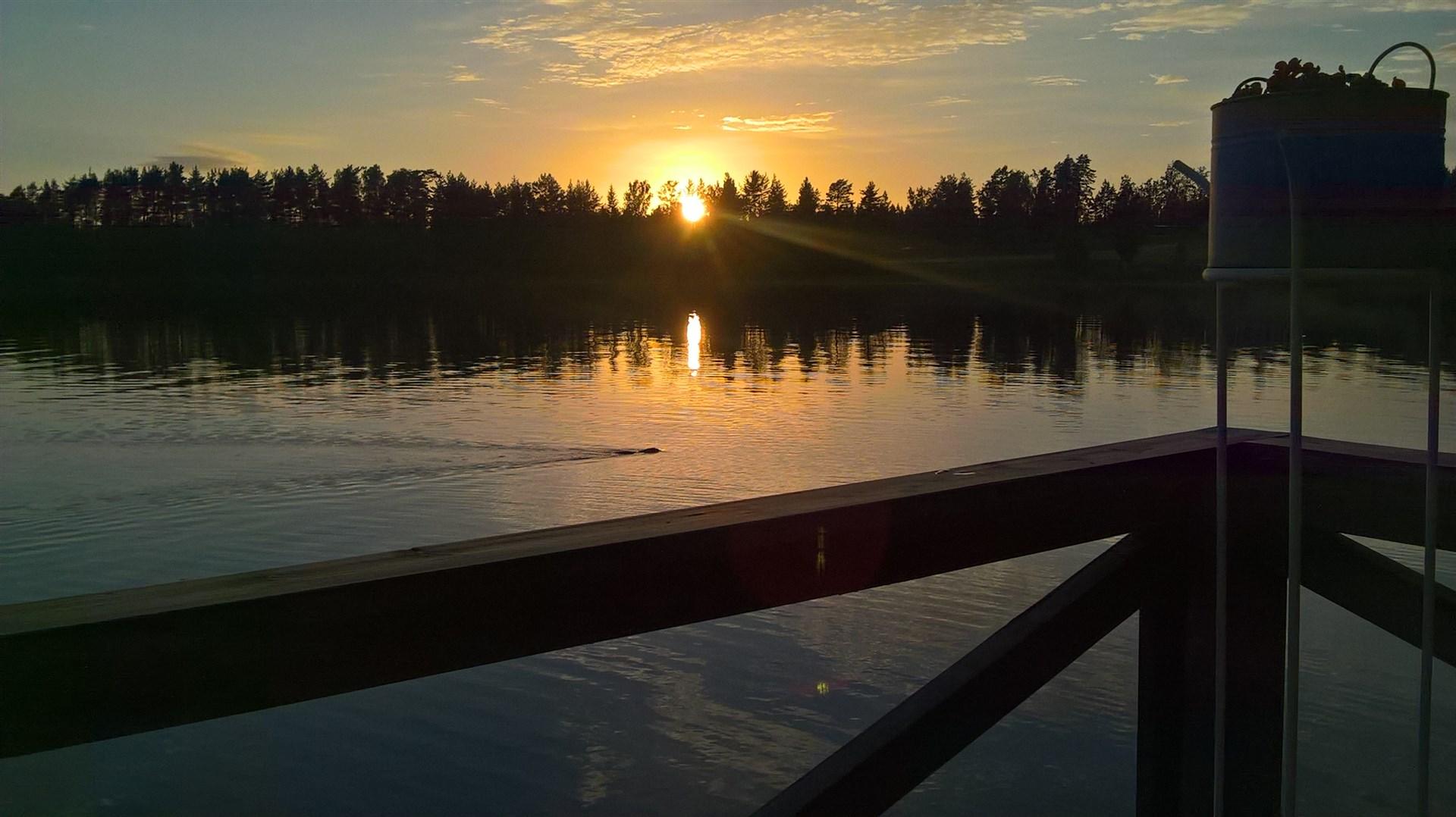 Bäver i solnedgång (privat bild)