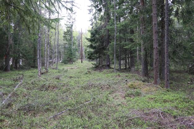 Marken består idag av ej avverkad skogsmark