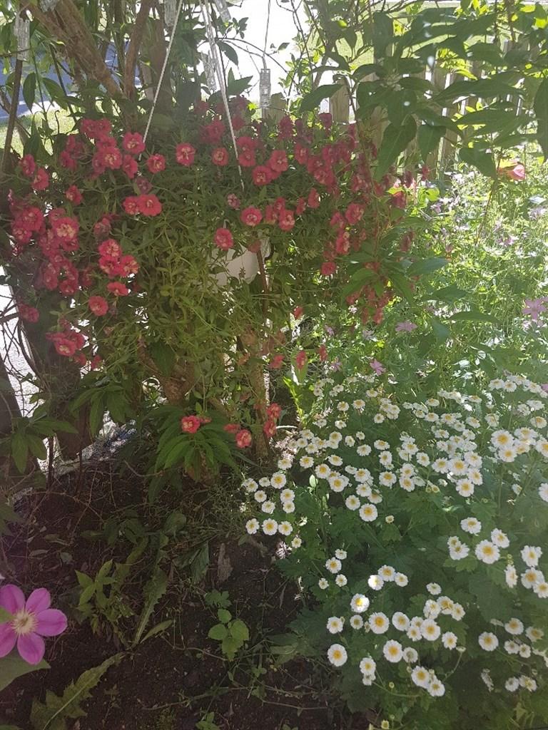 Blommor på uteplatsen (säljares bild)