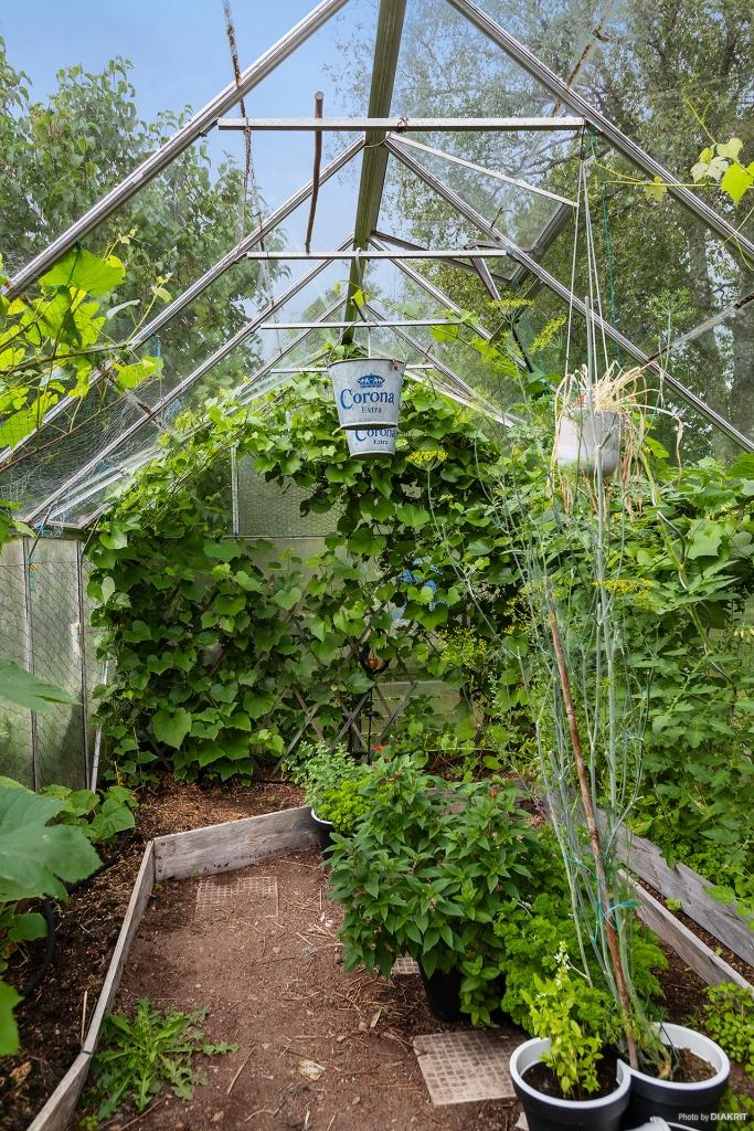 Växtlighet i det egna växthuset på tomten