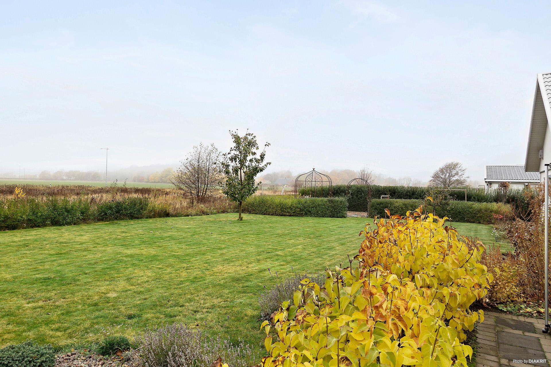 Trädgård med stor gräsmatta