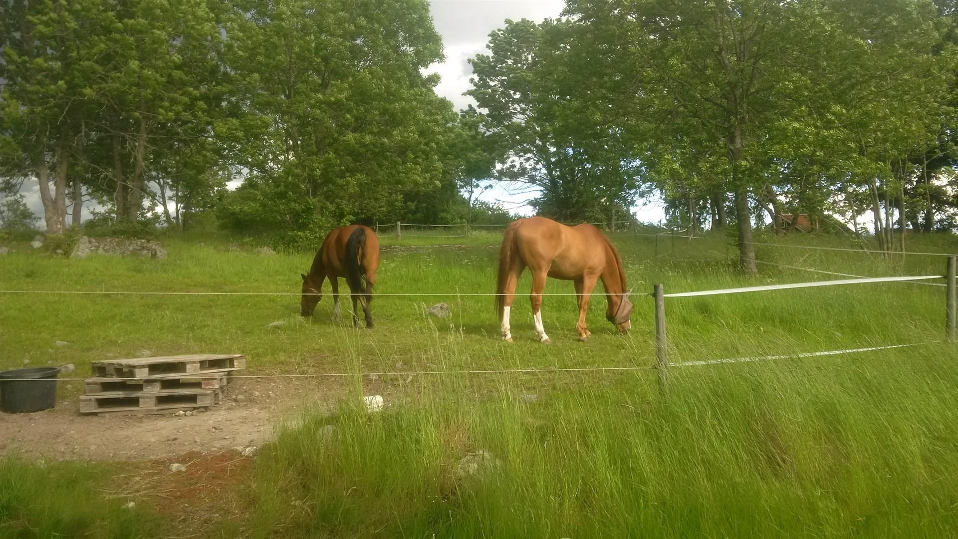 Gården är lämplig som framtida hästgård. Inhägnad hage samt möjlighet till fler hagar på fastigheten