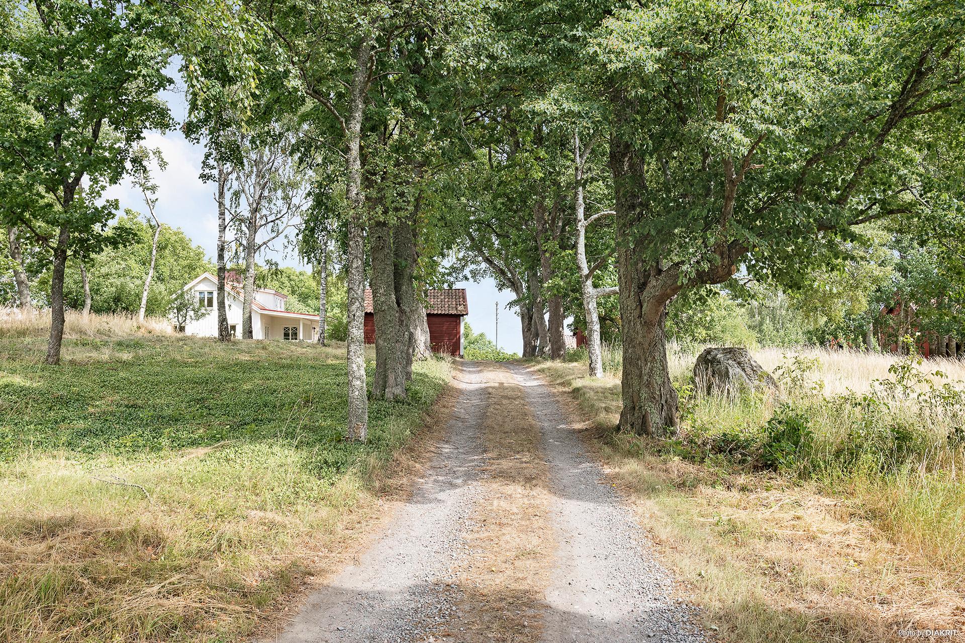 Vägen upp till gården via allén