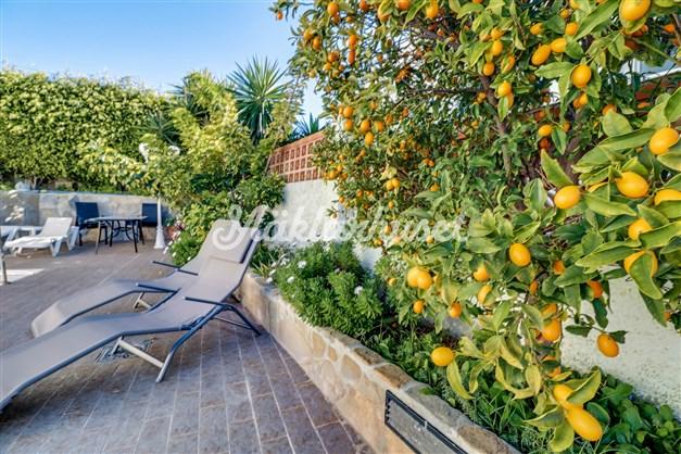 I trädgården växer Kumquat